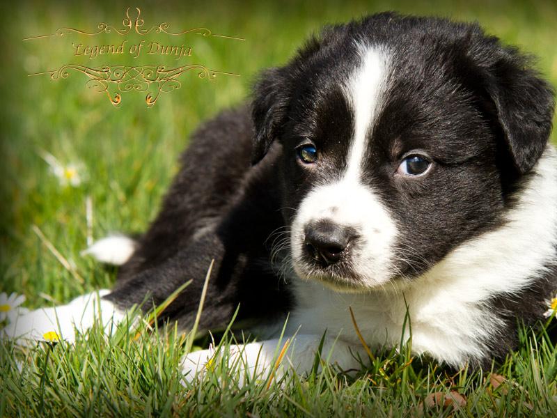 Gartenmobel Holz Oder Polyrattan : hundewelpen mischlinge zu verschenken willhaben marktplatz zu