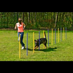 Fun Agility Slalom für Hunde